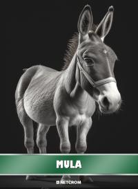 Cromo 117. Camello