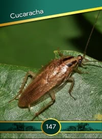 Cromo 147. Cucaracha