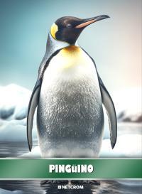 Pingüino. Cromo 2