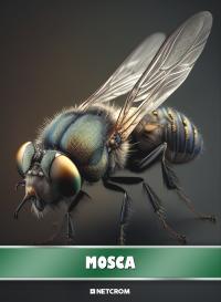 Cromo 36. Conejo