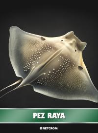 Cromo 41. Vaca