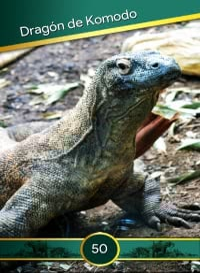 Cromo 50. Dragón de Komodo