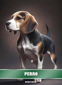 Perro. Cromo 7