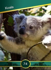 Koala. Cromo 74